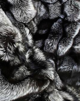 Fur - Fox