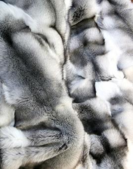 Kožešina polární liška